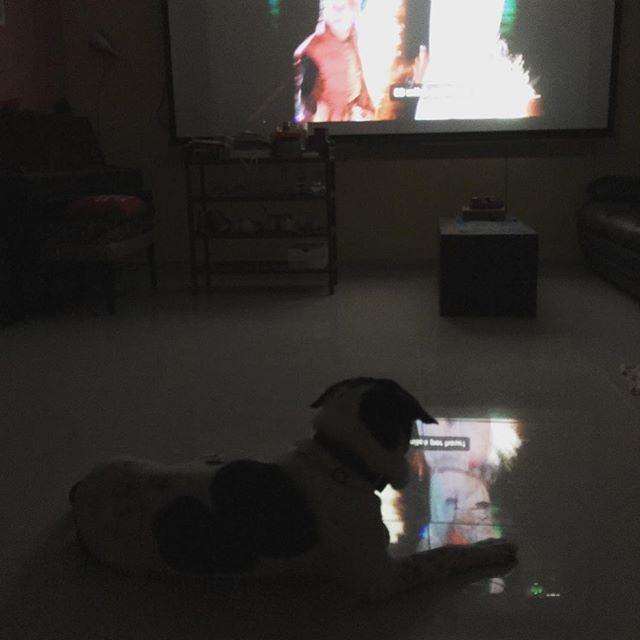 2015.12.25 微雨 怪我家裡沒電視,大概是第一次看電影的村長,對著屏幕吠了一大輪。死活沒法把電影人物驅趕後,唯有行來行去,自顧自不安。幸好最終還是安頓下來一起看,否則我好不容易在家看電影的機會就要泡湯了。聖誕快樂。